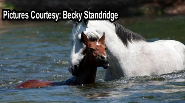 Flagra foi feito pela americana Becky Standridge. (Foto: Reprodução)