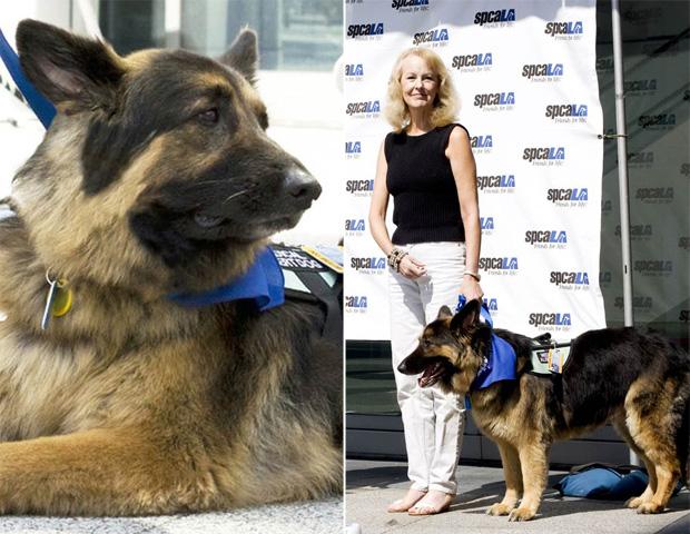 O cão Bear recebe a honraria ao lado de sua dona, Debbie Zeisler, nesta segunda-feira (7) (Foto: AP Photo/Society for the Prevention of Cruelty to Animals Los Angeles)
