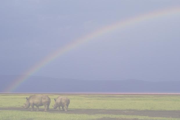Wild Africa (Foto: Alex Bernasconi)