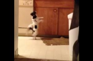 Cão dançarino virou febre na web (Foto: Reprodução/YouTube)