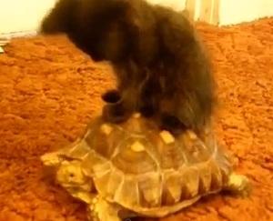 Gato andando em tartaruga é uma das cenas da compilação (Foto: Reprodução YouTube)