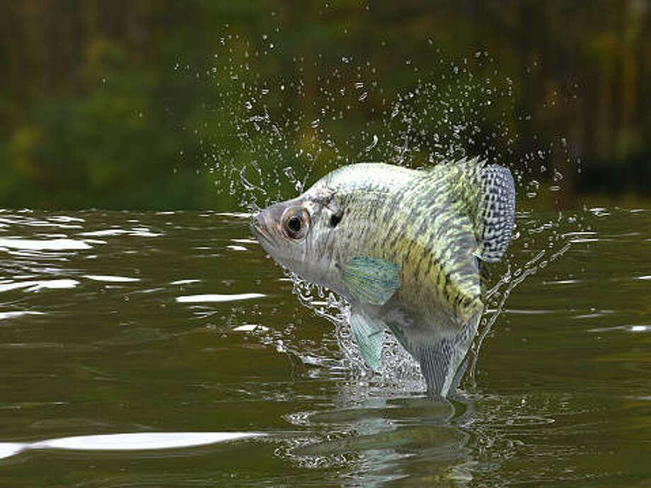 spring fish sale orders