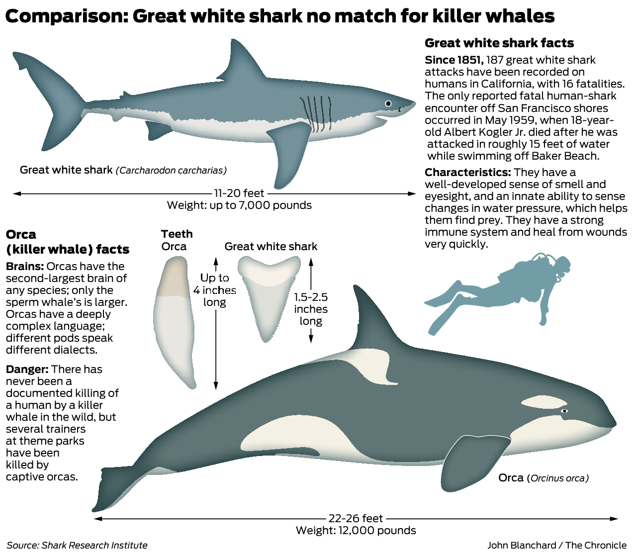Great Whites The Most Fearsome Ocean Predators New