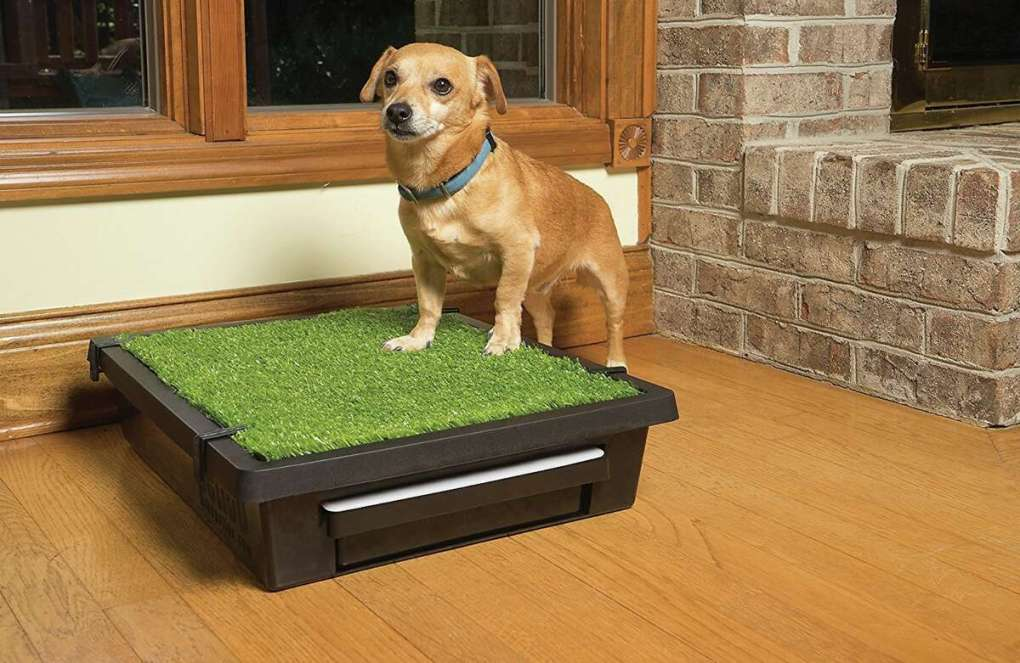 PetSafe Pet Loo Portable Indoor and Outdoor Dog Potty, from $ 69.95