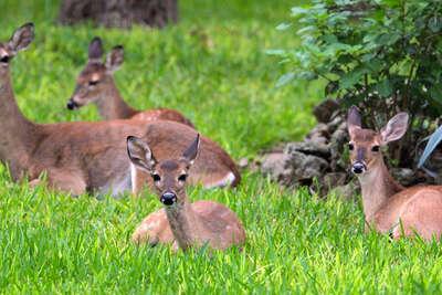 hollywood park lifts deer feeding ban