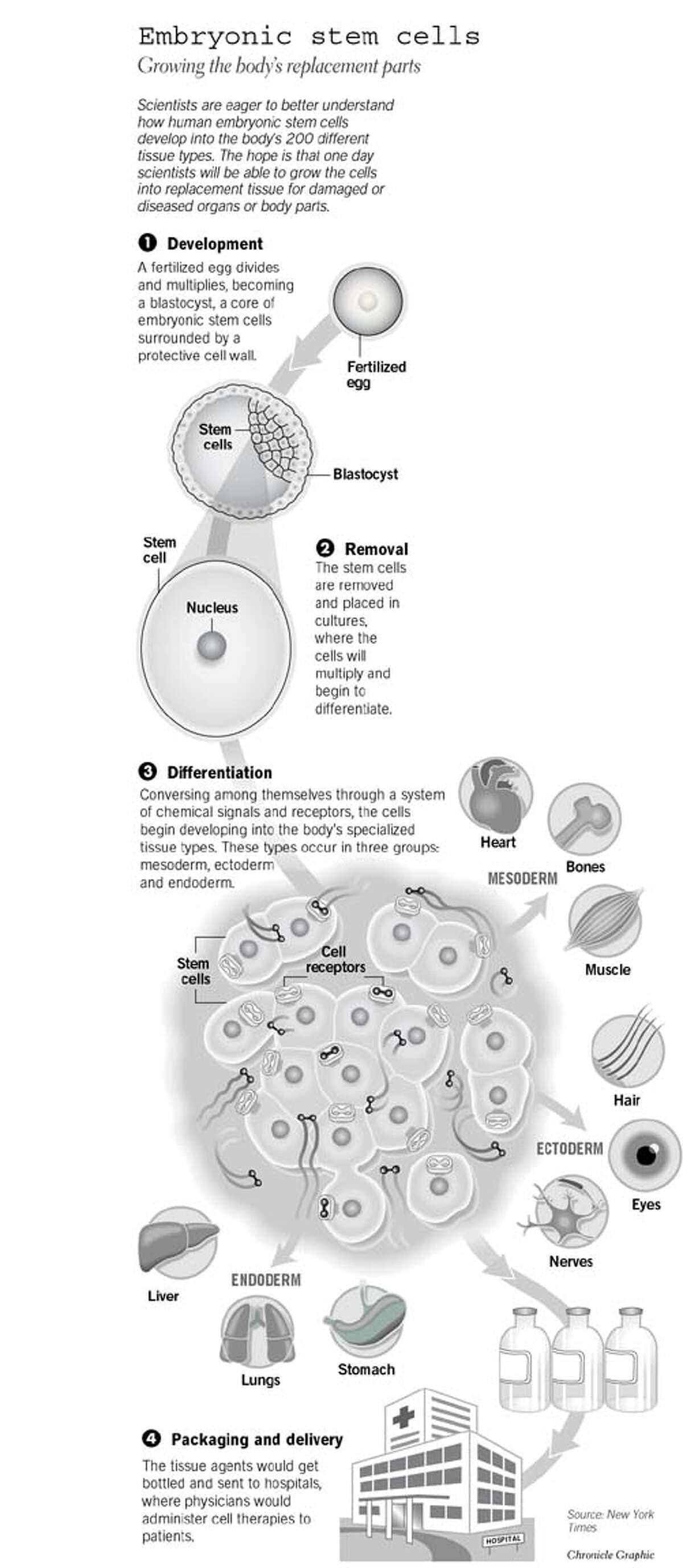 Abortion eugenics debates drive stem cell research ...