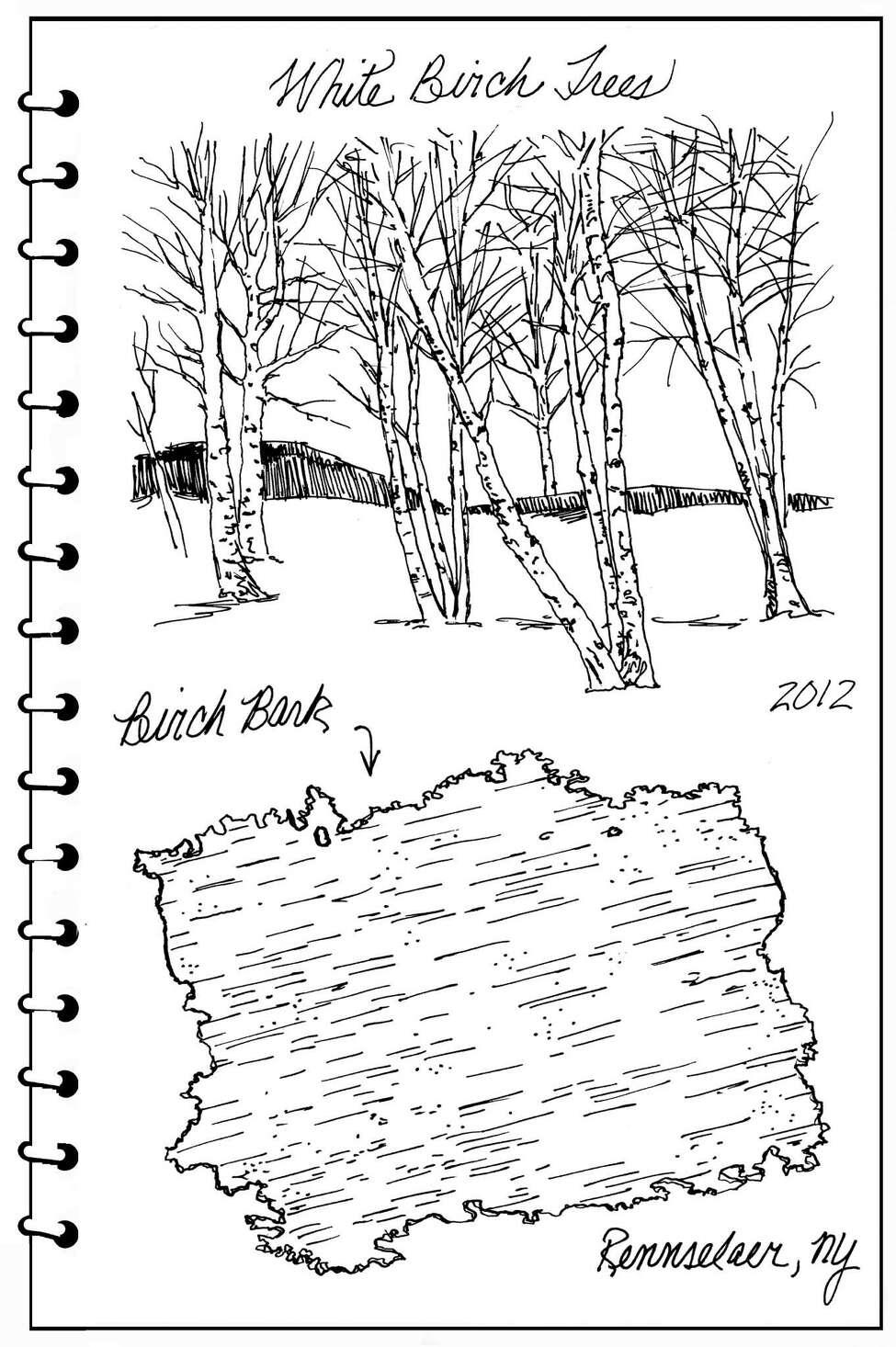 Backyard Naturalist