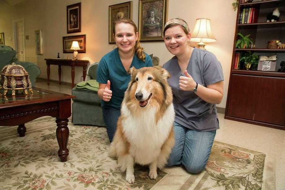 Stevenson Companion Animal Life-Care Center At Texas A&M