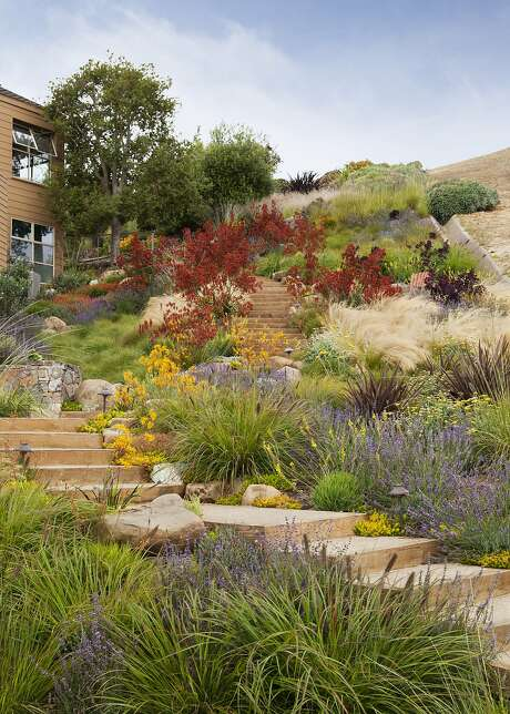 landscaping with drought fire