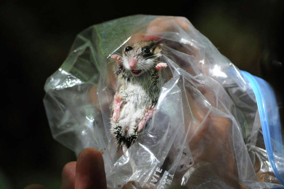 NY state probes case of hantavirus in Adirondacks - The Hour