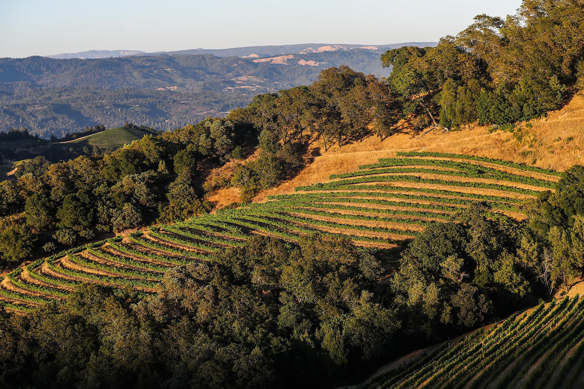 Battle For Napa Valley's Future Proposed Curb On