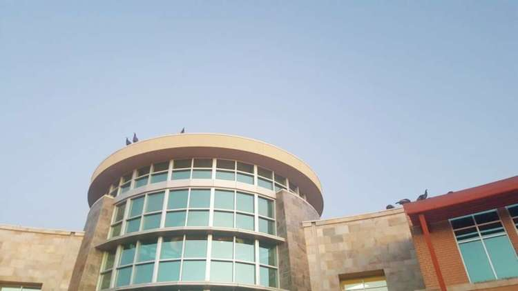 Turkeys seen on the roof of a hospital in Fairfield. Photo: Sherry Carter