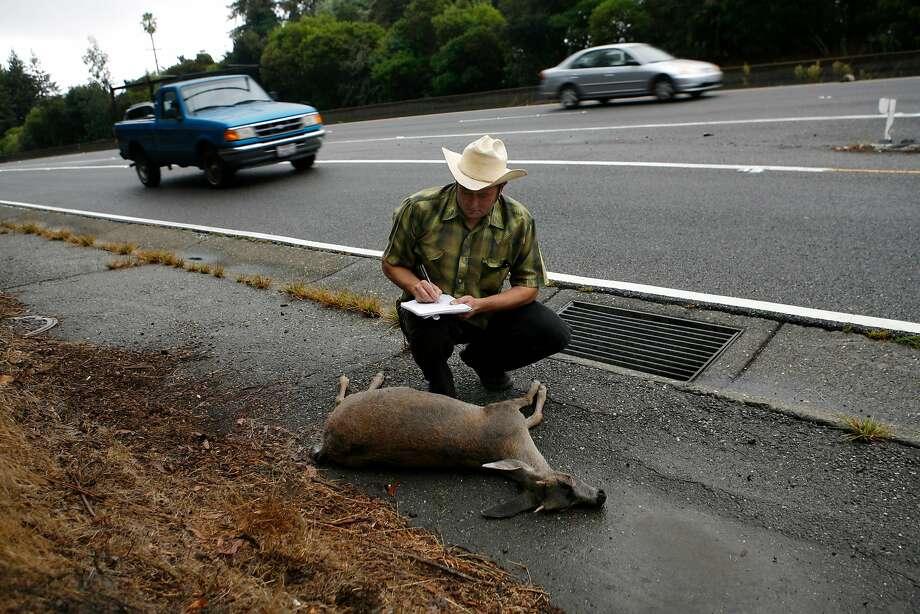 roadkill report bay area