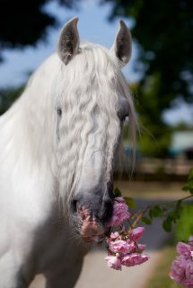 Mary Mccartney Finds Beauty In Horse