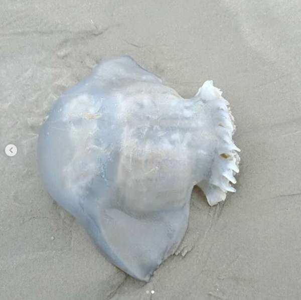 Unusual Sea Creatures Odd - Year of Clean Water