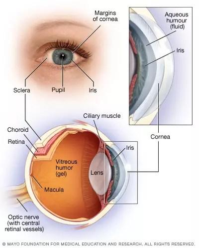 Kemampuan Lensa Mata Untuk Menebal Dan Menipis Disebut : kemampuan, lensa, untuk, menebal, menipis, disebut, Kemampuan, Lensa, Untuk, Mencembung, Memipih, Disebut
