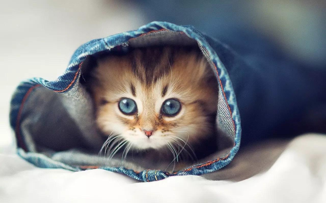Inilah 6 Alasan Kenapa Kucing Adalah Hewan Yang Paling Diminati