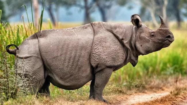 Hasil gambar untuk badak jawa dan sumatera