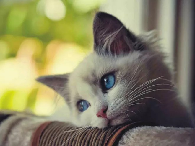 Foto kartun keren untuk profil wa perempuan. Kumpulan Foto Foto Kucing Kalo Lagi Stress Sedih Dan Depresi Gan Sini Masuk Gan Kaskus