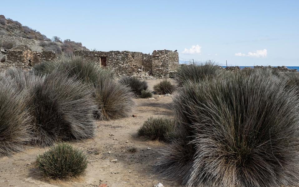 Η Γυάρος, νοτισμένη από το ιστορικό φορτίο – στα ερείπια των φυλακών ένα δένδρο μεγαλώνει. Με σεβασμό στη μνήμη, εκστρατεία με συμμετοχή του WWF στοχεύει στην ανάδειξη του μοναδικού θαλάσσιου πλούτου.