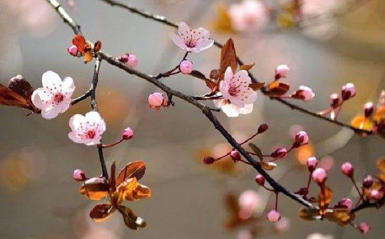 Что можно посадить под деревом грецкого ореха