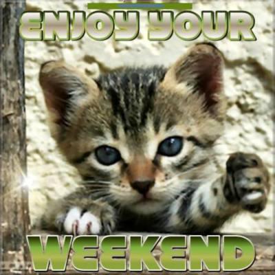 Enjoy Your Weekend Cute Kitten Days Weekend