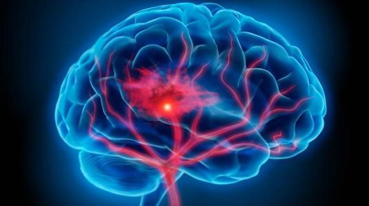 Bildergebnis für Gehirn