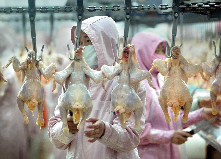Image result for chickens shipped to china for processing