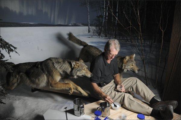Museum Dioramas Endangered Animals
