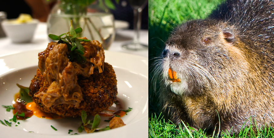 An Invasive Menu Eating Termites and Water Rats to Save
