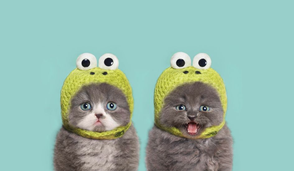 Wallpaper Cute Cats Kittens The Bad News About Good News