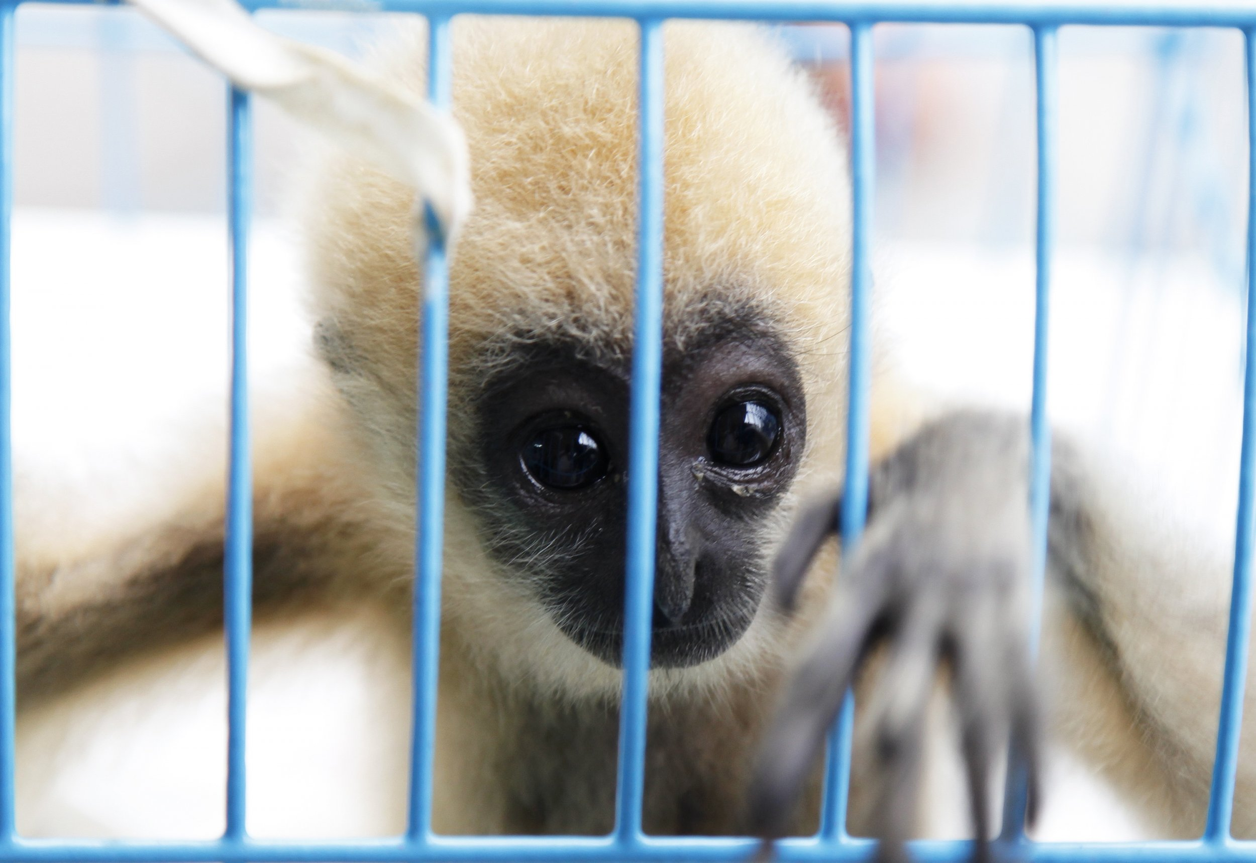 Facebook Being Used to Illegally Traffic Endangered Animals