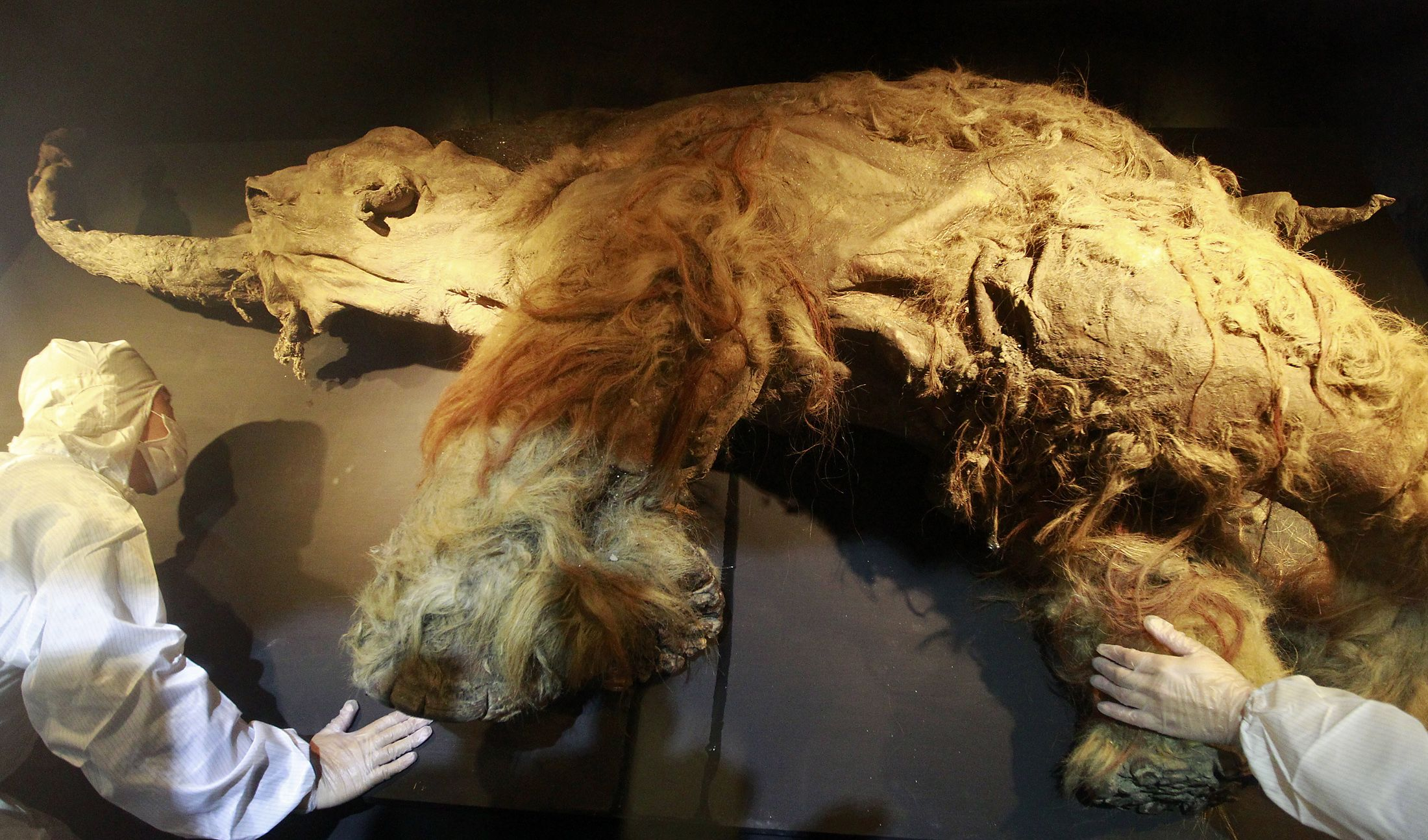 Scientists May Have Solved Mystery Behind Extinction Of
