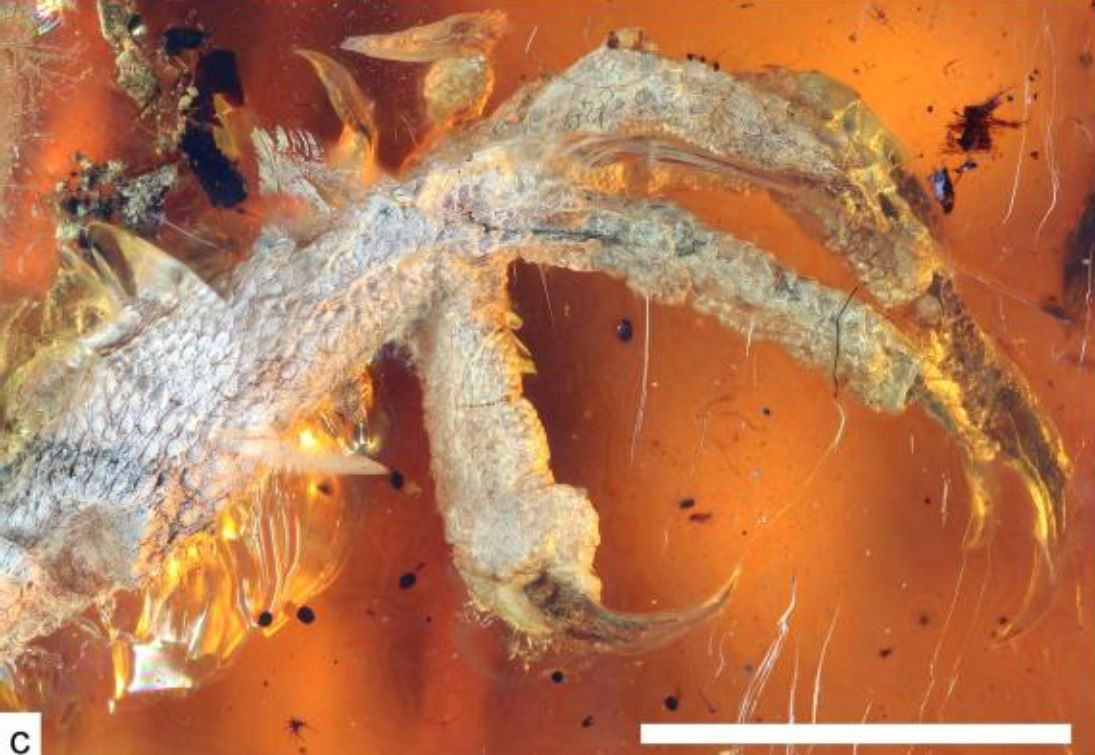 99 MillionYearOld Baby Bird Trapped in Amber Discovered