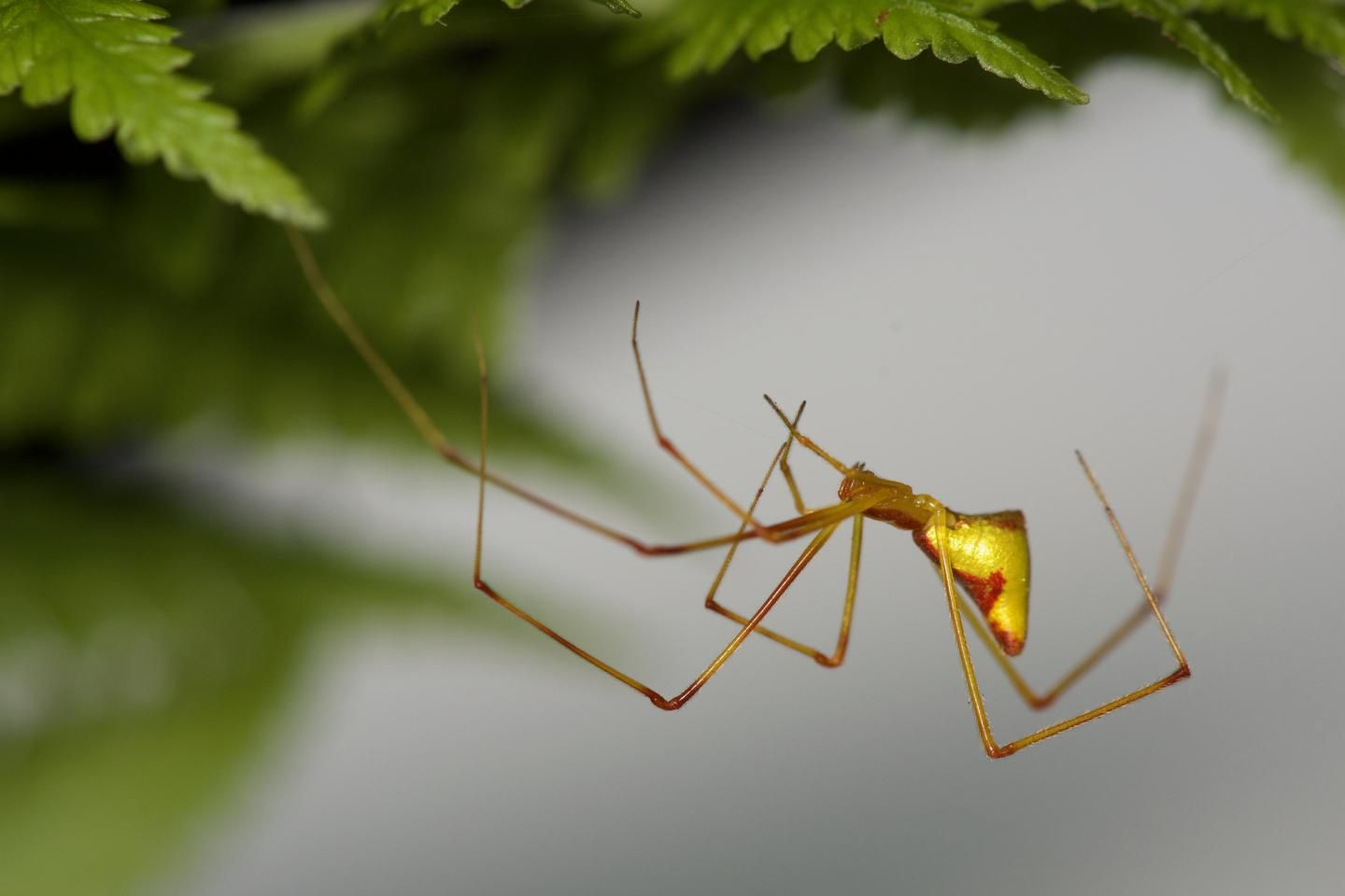 How Do Different Species Evolve Spiders on Hawaii Reveal Surprising Phenomenon