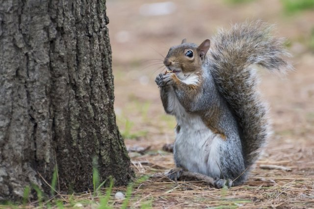 Image result for A man who ate squirrel brains