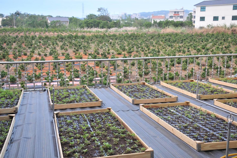 艾草飄香在桃園 低碳環保鄰里計畫打造綠屋頂 | 環保 | 新頭殼 Newtalk