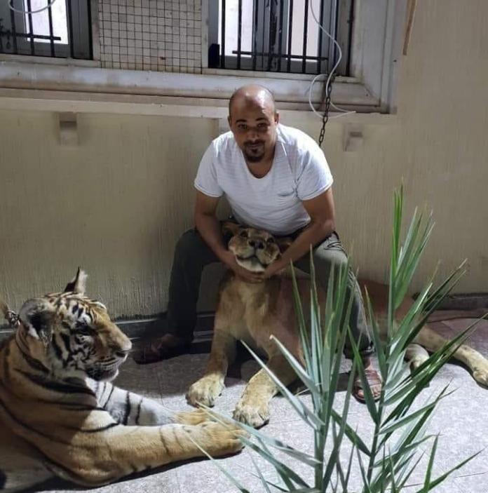 Abdulrahim al-Kani posing with his two tigers.