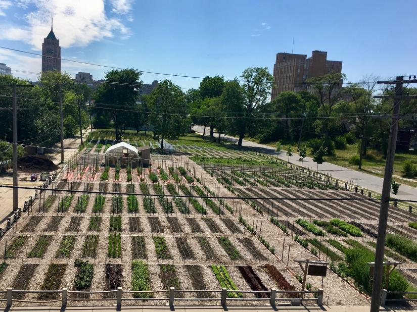 10,000 volunteers, 300 vegetables grown: the Detroit urban farm is successful.
