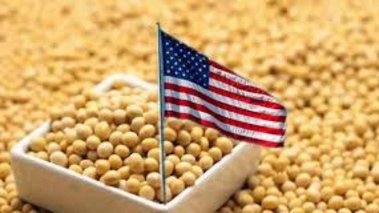 中國低調續購美國大豆 或因巴西大豆漲價