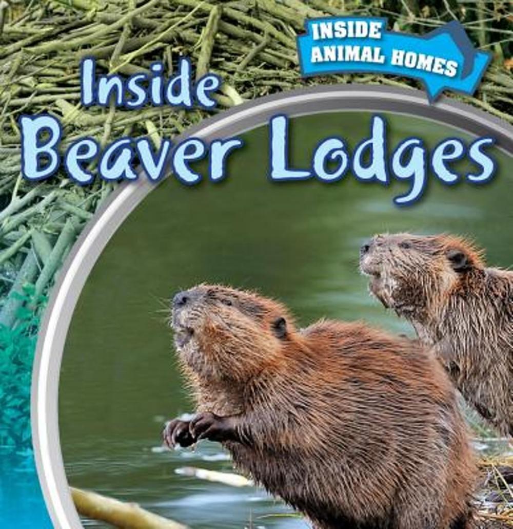 medium resolution of inside a beaver lodge diagram