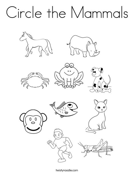 circle the mammals coloring page  twisty noodle