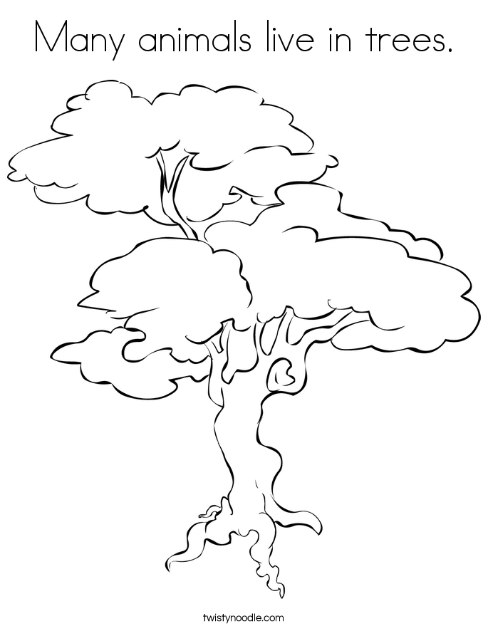 treelive auto electrical wiring diagram Charvel Model 4 many animals live in trees coloring page