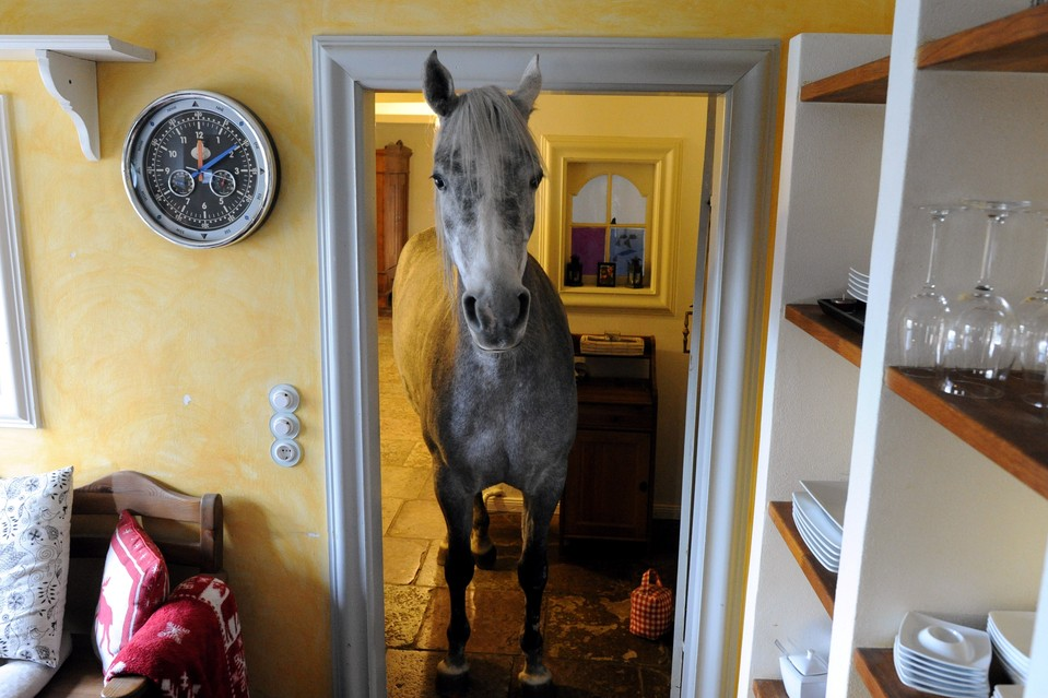 Forget the Barn This Horse Lives Inside A House  Photo