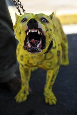 Owners of Aggressive Dogs Their Bark Worse Than Their