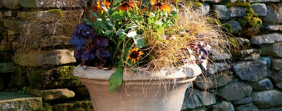 Mums Not The Word Fresh Ideas For Container Plants Wsj