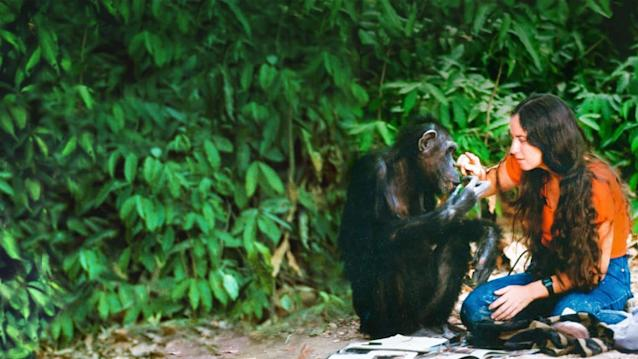 The tragedy—and urgent warning—behind Lucy, the chimp raised to be human