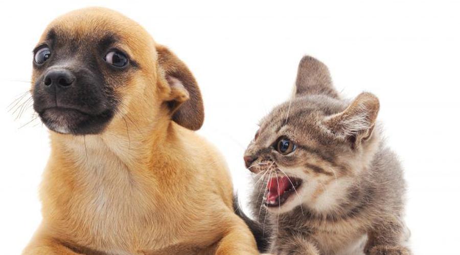 Каких животных не стоит заводить вместе