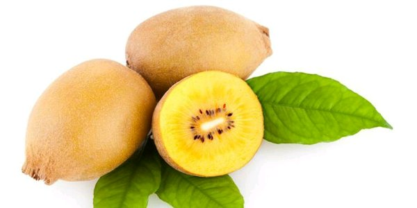 Bibit buah Kiwi Gold