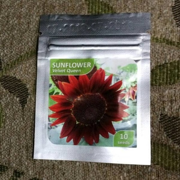 Benih Bibit Bunga Matahari Sunflower VELVET QUEEN